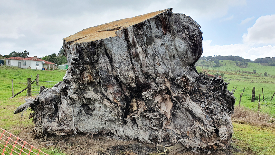Ancient kauri trees reveal a turning point in Earth's history 42,000 years ago