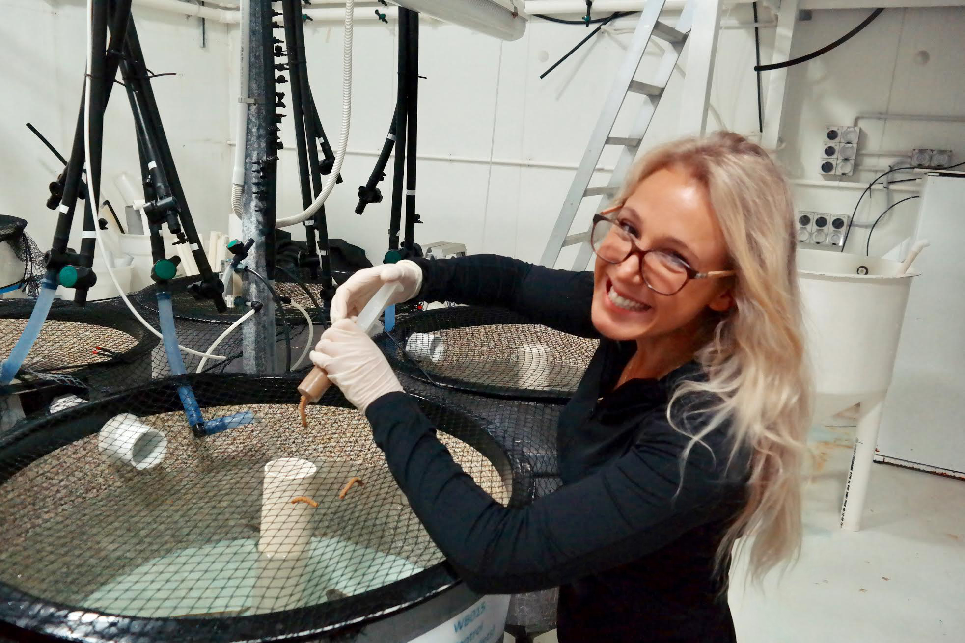 Fish snack on microplastics