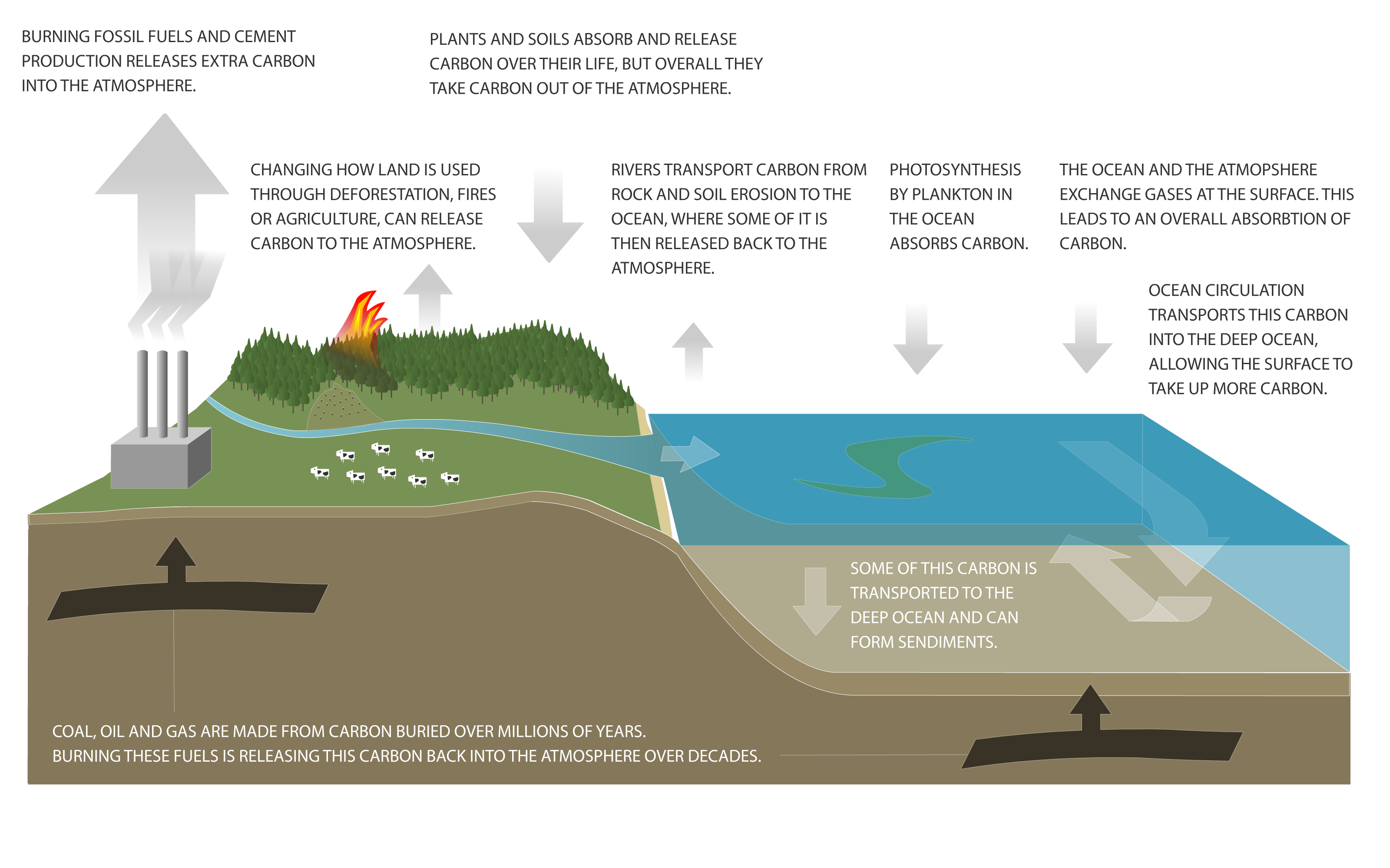 Carbon cycle diagram niwa carbon cycle diagram ccuart
