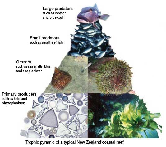 Using Food Webs To Manage Coastal Resources Niwa