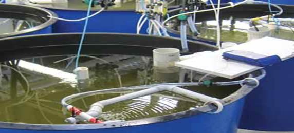 Aquaculture tanks | NIWA