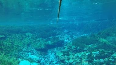 Waikoropupu Springs video