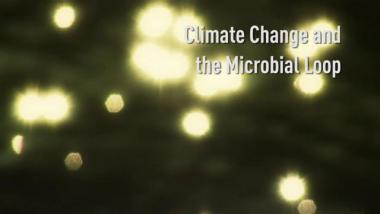 Climate Change and the Microbial Loop
