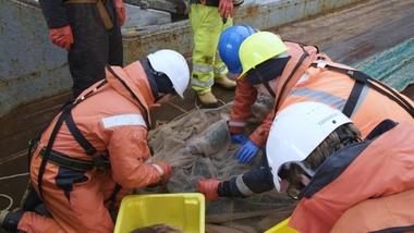 Powering diversity in the Ross Sea