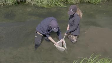 SHMAK Stream Life – Collecting Benthic Macroinvertebrates in Muddy-Bottom Streams